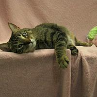 Adopt A Pet :: Sweet Pea - Redwood Falls, MN