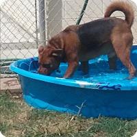 Shepherd (Unknown Type)/Retriever (Unknown Type) Mix Dog for adoption in Sacramento, California - Rudy