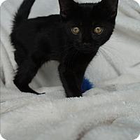 Adopt A Pet :: Boo - Lakeland, FL