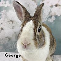 Adopt A Pet :: George - Auburn, CA