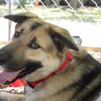 Adopt A Pet :: Ray - Wimberley, TX