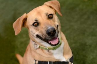 Shepherd (Unknown Type) Mix Dog for adoption in Sedona, Arizona - Junie