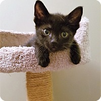 Adopt A Pet :: Raisin - Vancouver, BC
