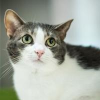 Adopt A Pet :: Shirley - Berea, OH