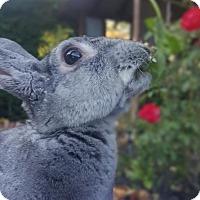 Adopt A Pet :: Fioki - Los Angeles, CA