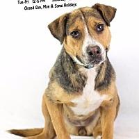 Adopt A Pet :: Georgia-AC-18633-I - Greeneville, TN