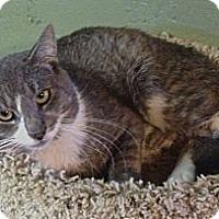 Adopt A Pet :: Marvin - Hyde Park, NY