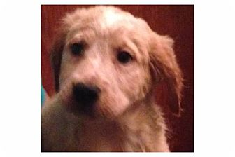 Hound (Unknown Type) Mix Puppy for adoption in Pompton Lakes, New Jersey - Jazz