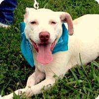 Adopt A Pet :: ARCHER - Leland, MS
