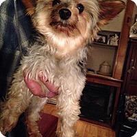 Adopt A Pet :: Curtis - Butler, OH