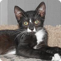 Adopt A Pet :: Lorenza - North Highlands, CA