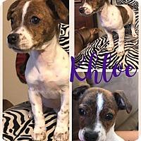 Adopt A Pet :: Khloe - Scottsdale, AZ