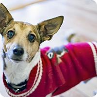 Adopt A Pet :: Julio Franklin Santana - Jersey City, NJ