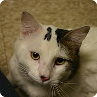 Adopt A Pet :: Gus Gus - Hastings, NE