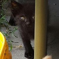 Adopt A Pet :: Scrappy - Snow Hill, NC