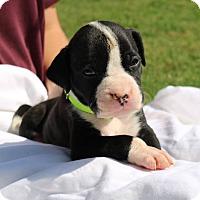 Adopt A Pet :: Kate Finney - Alpharetta, GA