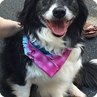 Adopt A Pet :: Zeke - Alpharetta, GA