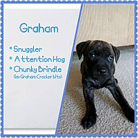 Adopt A Pet :: Graham - Oviedo, FL