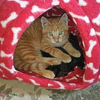 Adopt A Pet :: Feo - Grand Ledge, MI