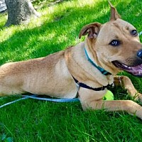Adopt A Pet :: Chance - Hillside, IL
