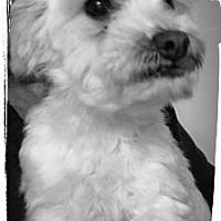 Adopt A Pet :: Mirana - Newark, DE