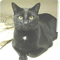 Adopt A Pet :: Wyatt - Mesa, AZ
