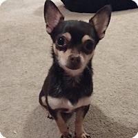 Adopt A Pet :: Low-Ryder - AUSTIN, TX