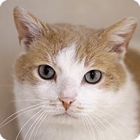 Adopt A Pet :: Birch Bark - Chicago, IL