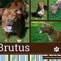 Adopt A Pet :: Brutus - Channahon, IL