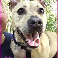 Adopt A Pet :: KAYLA - Tinton Falls, NJ