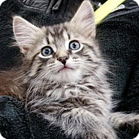 Adopt A Pet :: Barlclay - River Edge, NJ