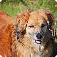 Adopt A Pet :: Duke - Fort Atkinson, WI