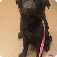 Adopt A Pet :: Travisio - Denver, CO