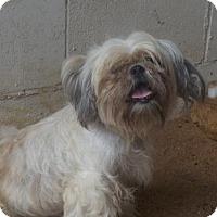 Adopt A Pet :: Gracie - Zaleski, OH