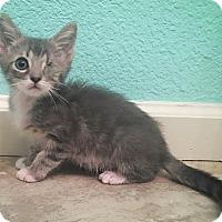 Adopt A Pet :: Sammy - Walnut Creek, CA