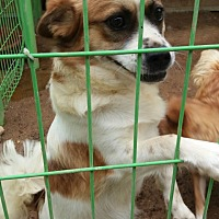 Adopt A Pet :: Spotty - Oakton, VA