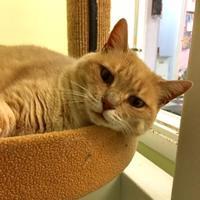 Adopt A Pet :: Merlot - Norfolk, VA