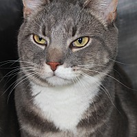 Adopt A Pet :: KADEN - Clayton, NJ