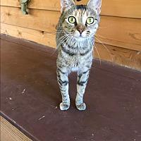 Adopt A Pet :: Momma Ray - Sedalia, MO