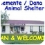 Photo 2 - American Eskimo Dog Dog for adoption in San Clemente, California - BOO