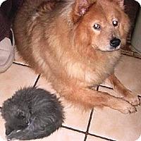 Adopt A Pet :: Tara - Hollywood, FL