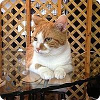 Adopt A Pet :: Pretzel - Harvey, LA