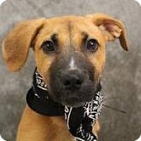 Adopt A Pet :: Jelly - South Jersey, NJ