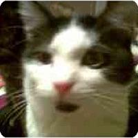 Adopt A Pet :: Ranger - Proctor, MN