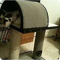 Adopt A Pet :: Mina - Washington Terrace, UT