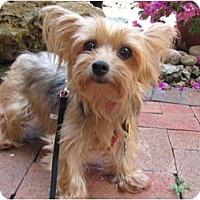 Adopt A Pet :: Nika - Fairfax, VA