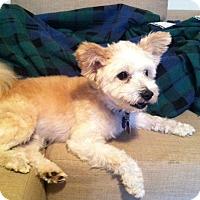 Adopt A Pet :: Kenny - Mt Gretna, PA
