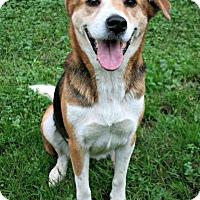 Adopt A Pet :: Caroline - Lufkin, TX
