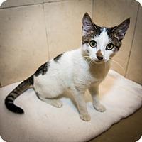 Adopt A Pet :: French Toast - New York, NY