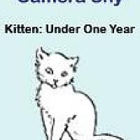 Adopt A Pet :: Rue - Roseville, CA